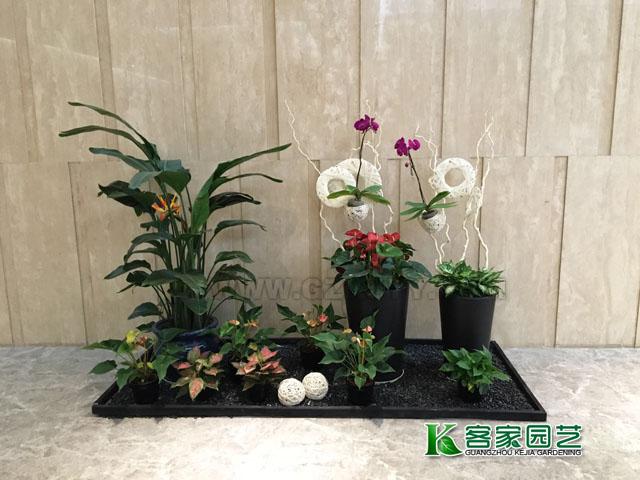 白云区花木出租-组合盆景15