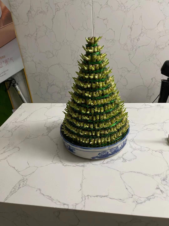 广州植物租摆--13层富贵塔